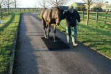 Horse walking across a Plaway Portable Scale on pavement.
